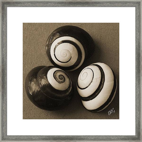 Seashells Spectacular No 28 Framed Print