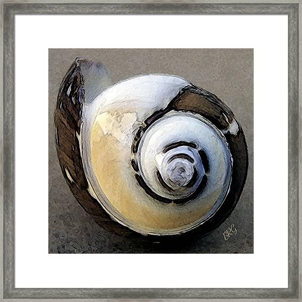 Seashells Spectacular No 3 Framed Print