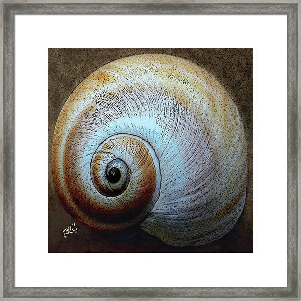 Seashells Spectacular No 36 Framed Print