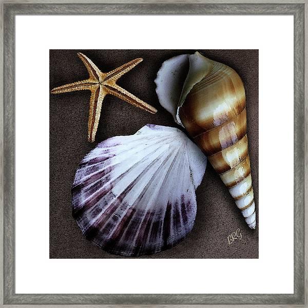 Seashells Spectacular No 37 Framed Print
