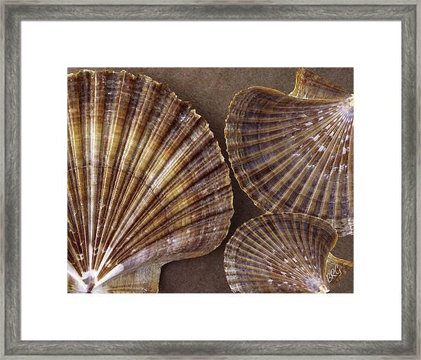 Seashells Spectacular No 7 Framed Print