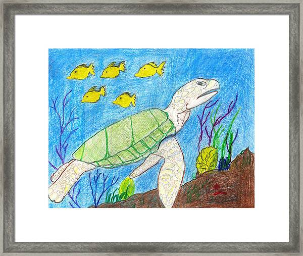 Seaturtle Swimming The Reef Framed Print by Fred Hanna