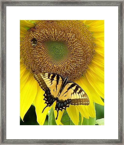 Secret Lives Of Sunflowers Framed Print