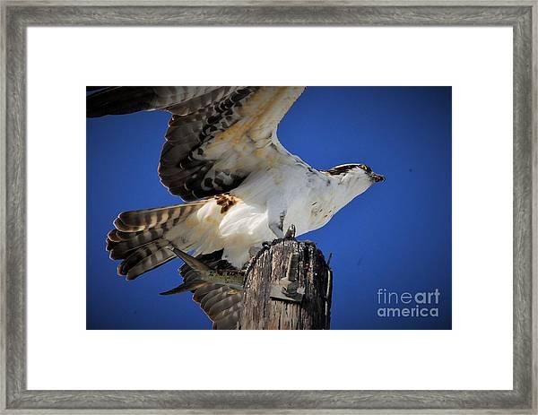 See Ya Framed Print