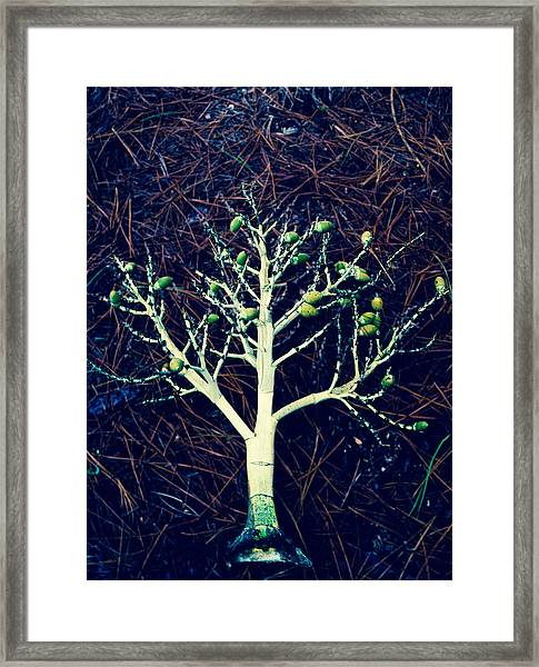 Seeded Tree's Framed Print