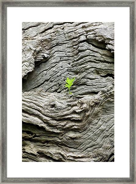 Seedling Growing On A Tree Framed Print