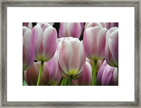 Seeing Pink Framed Print