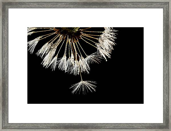 Seeking Freedom Framed Print