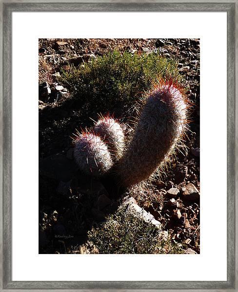 Senor Cacti Framed Print