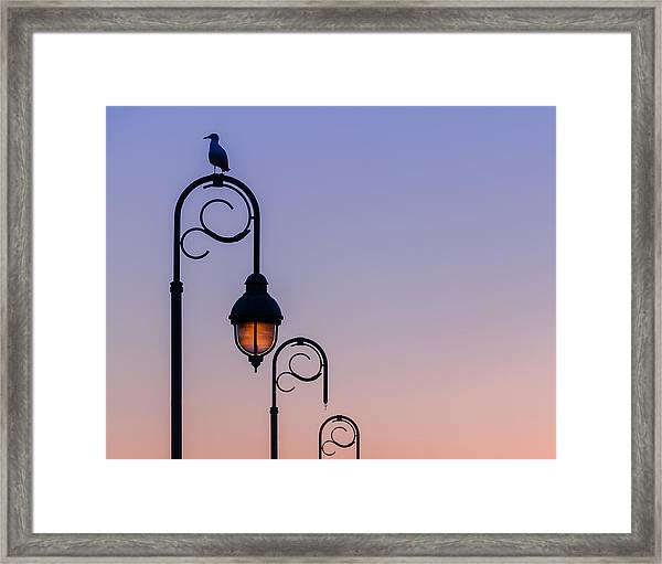 Framed Print featuring the photograph Sentinel At Sunset by Steve Stanger