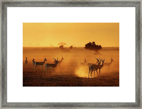 Sentinels Framed Print by Mathilde Guillemot