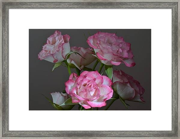 Serene Roses. Framed Print by Terence Davis