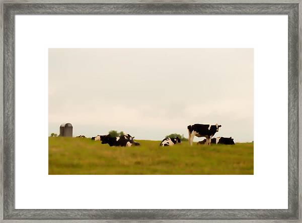 Serene Sunday Framed Print