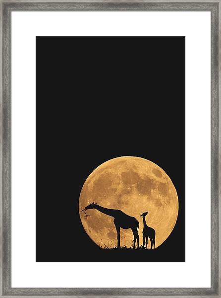 Serengeti Safari Framed Print