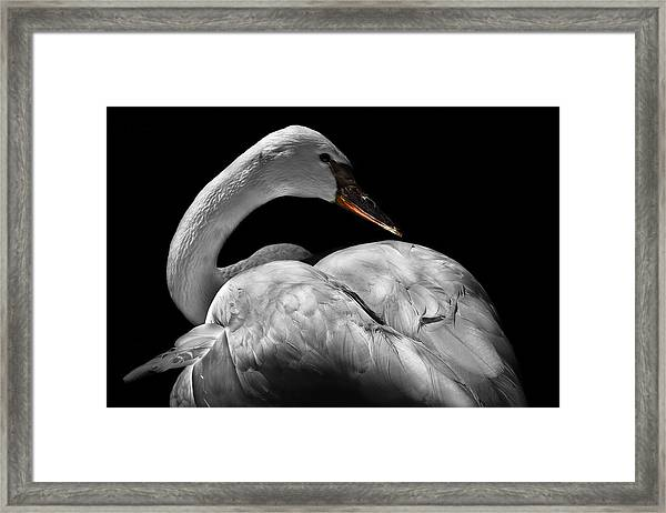 Framed Print featuring the photograph Serenity by Debra and Dave Vanderlaan