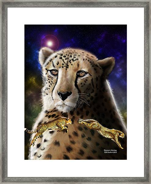 First In The Big Cat Series - Cheetah Framed Print