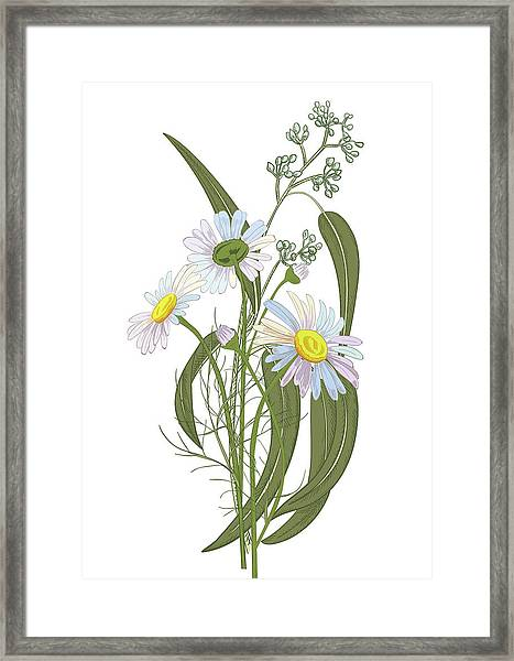 Set Of Chamomile Daisy Bouquets White Framed Print