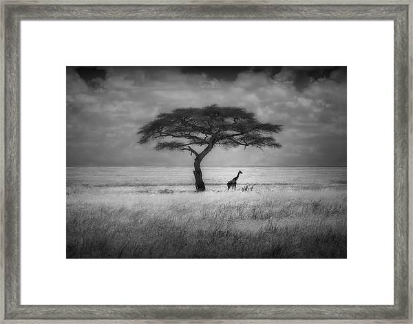 Shade Framed Print by Greg Metro