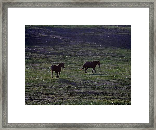 Shades Framed Print