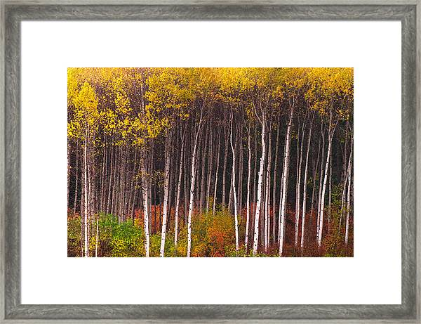 Shades Of Autumn Framed Print