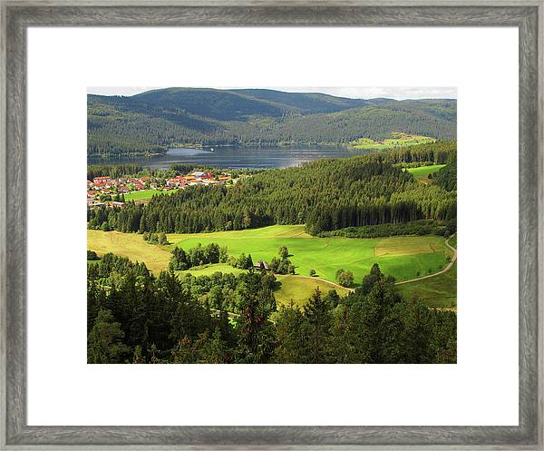 Shades Of Green In Black Forest Framed Print