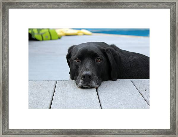 Shadow Lounging On The Deck Framed Print
