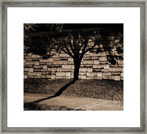 Shadow Tree Framed Print