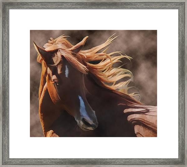 Framed Print featuring the photograph Shahmaan by Melinda Hughes-Berland