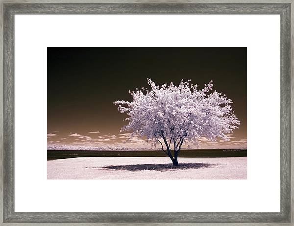 Shaking The Tree Framed Print