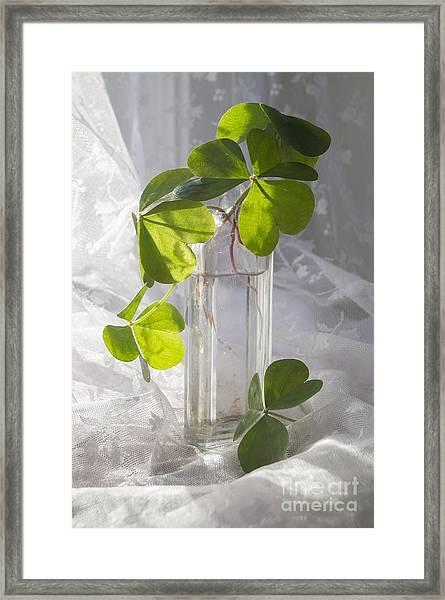 Shamrocks In A Vintage Bottle Framed Print