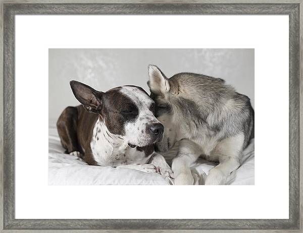 Sharing Secrets  Framed Print