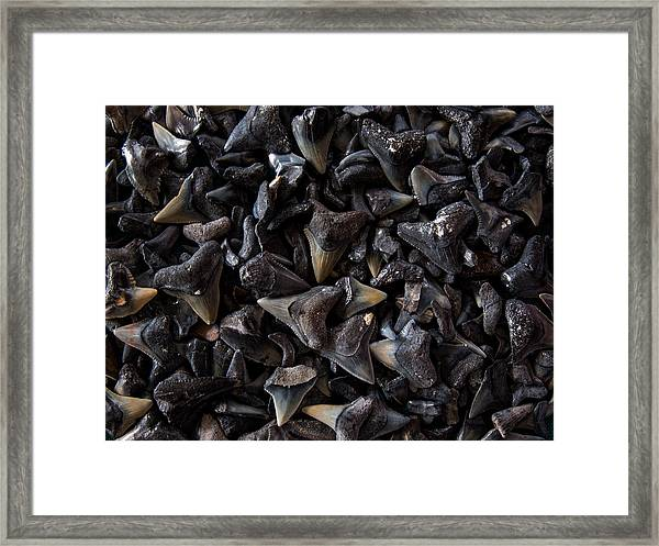 Shark Teeth Framed Print
