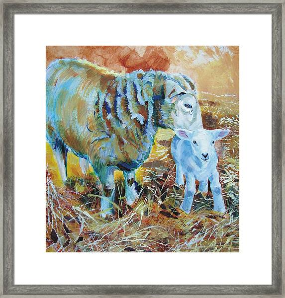 Sheep And Lamb Framed Print