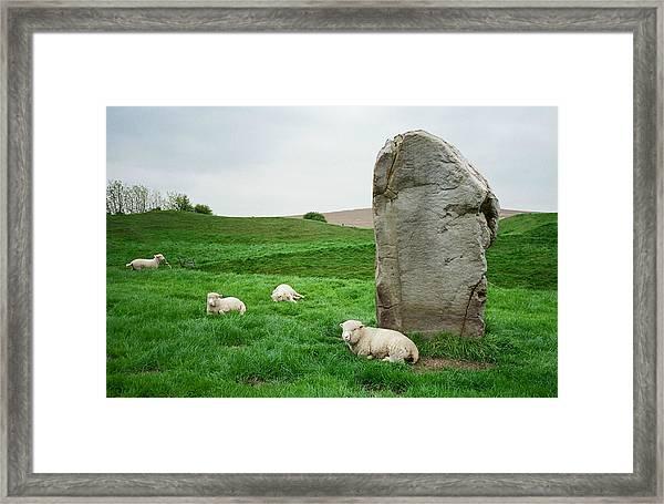Sheep At Avebury Stones - Original Framed Print