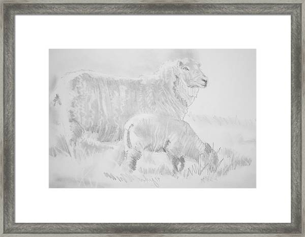 Sheep Lamb Pencil Drawing Framed Print