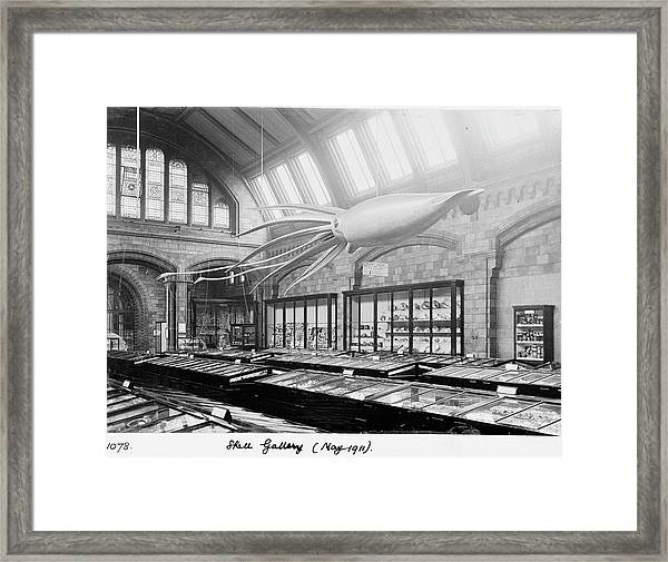 Shell Gallery Framed Print by Natural History Museum, London/science Photo Library