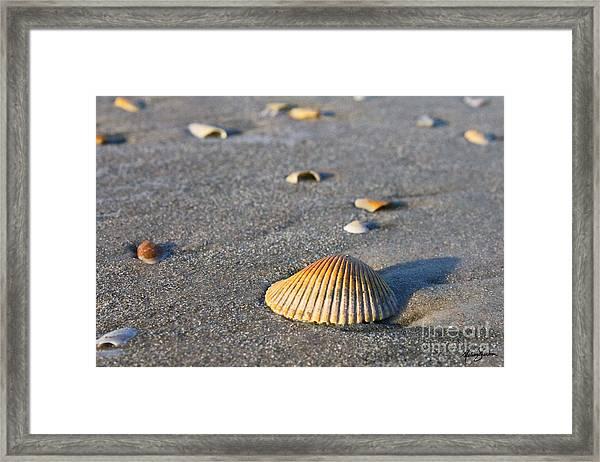 Shells 01 Framed Print
