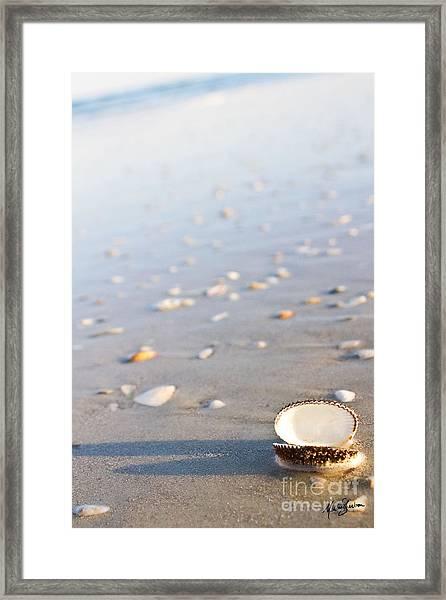 Shells 02 Framed Print