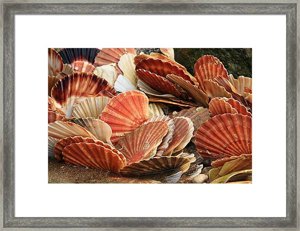 Shells On The Shore Framed Print