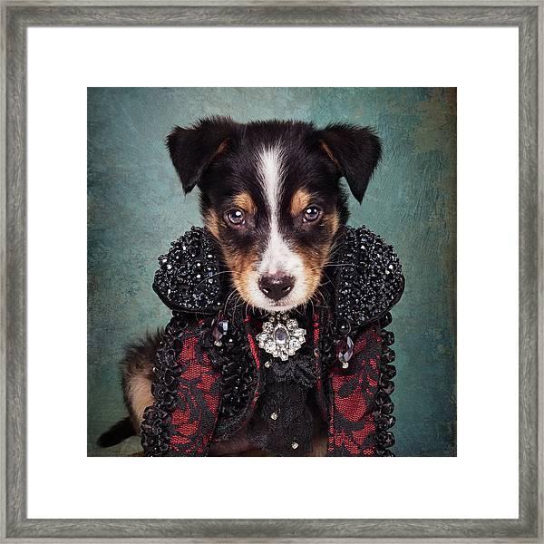 Shelter Pets Project - Loki Framed Print by Tammy Swarek