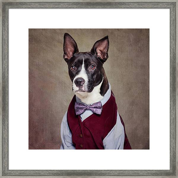 Shelter Pets Project - Petey Framed Print by Tammy Swarek