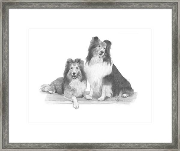 Shelties Framed Print