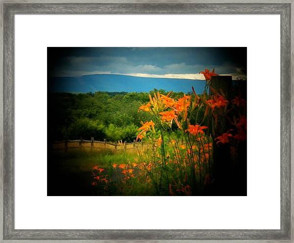 Shenandoah Lilies Framed Print
