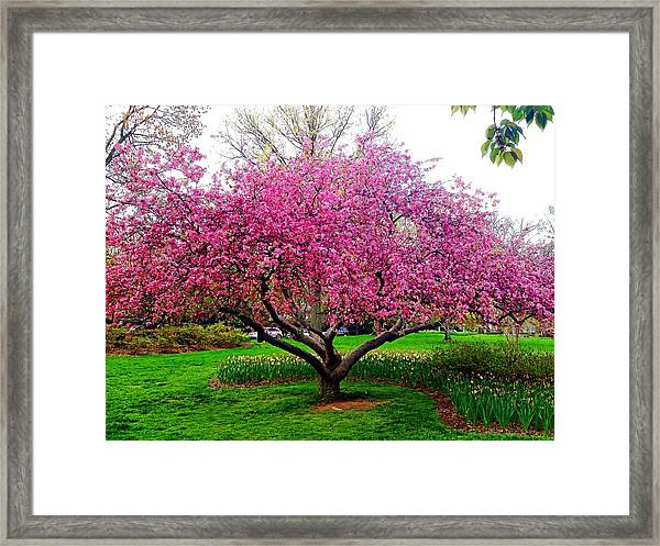 Sherwood Gardens Tree Framed Print