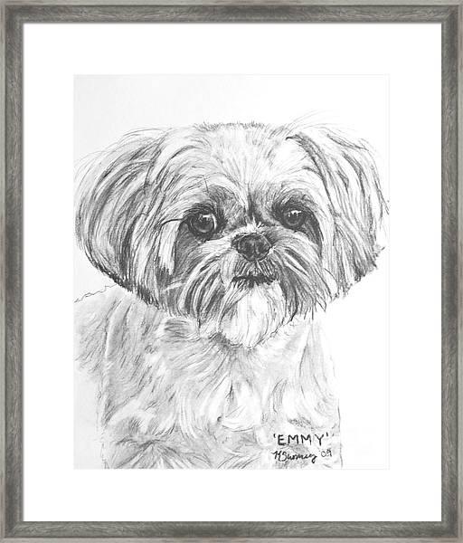 Shih Tzu Portrait In Charcoal Framed Print
