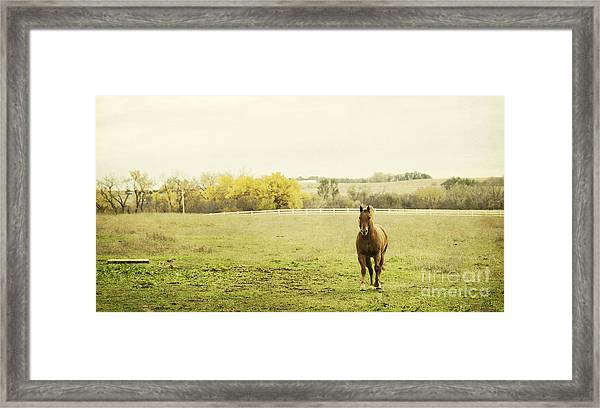 Shiloah On The Run Framed Print