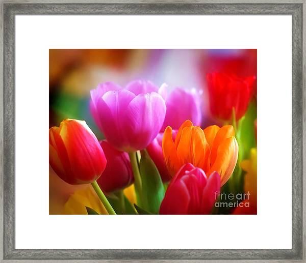 Shining Tulips Framed Print