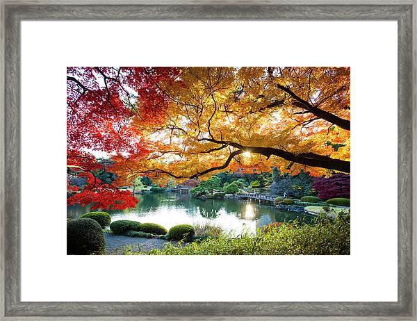 Shinjuku Gyoen National Garden In Framed Print