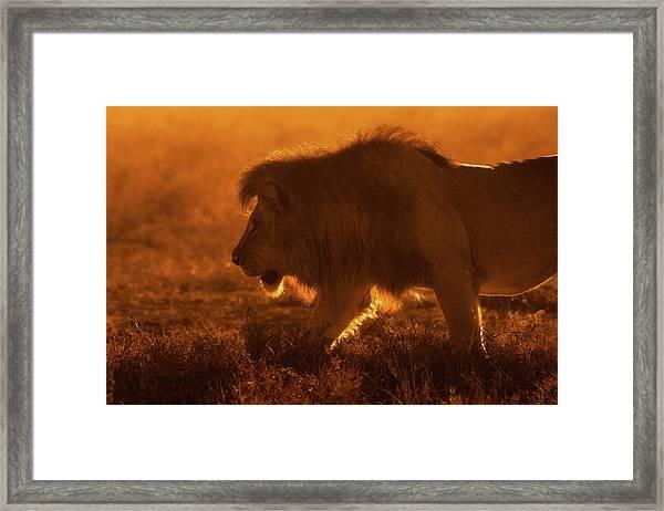 Shiny King Framed Print