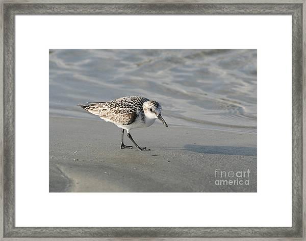 Shore Bird On Ocean Beach Framed Print